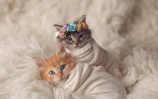 Filhotes de gato em ensaio fotográfico