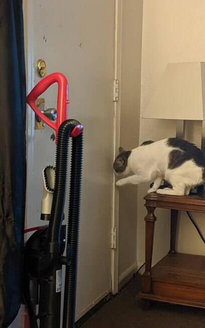 Gato carente