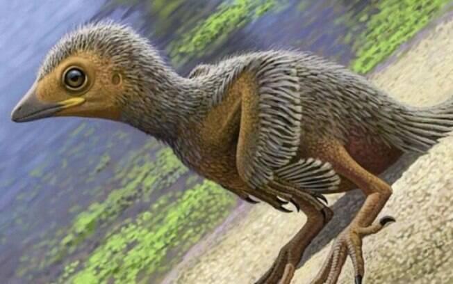 Pesquisadores dos Estados Unidos, Espanha, Suécia e Reino Unido atuaram no estudo sobre o raríssimo fóssil de ave