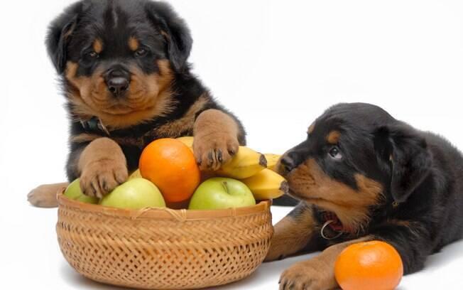 Por mais que os cães possam comer frutas e verduras, não são todas que fazem bem para sua saúde