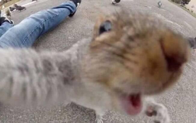 Esses bichinhos tirando selfies são muito engraçados