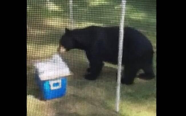 Intrometido, o urso resolveu se alimentar com o que restou do bolo da festa de aniversário