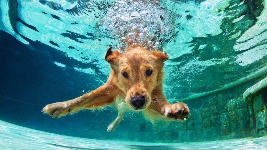 O ideal é sempre optar pelo fator mais alto, mesmo se o canino não estiver entre os mais sensíveis. Lembre-se que proteção nunca é demais quando se está exposto ao sol