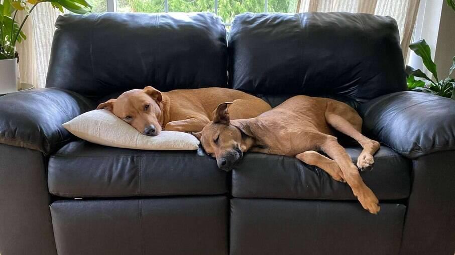 Clementine confiava em outros cães e isso a ajudou a confiar também na nova família