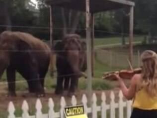 Elefantes dançam enquanto violonista ensaia