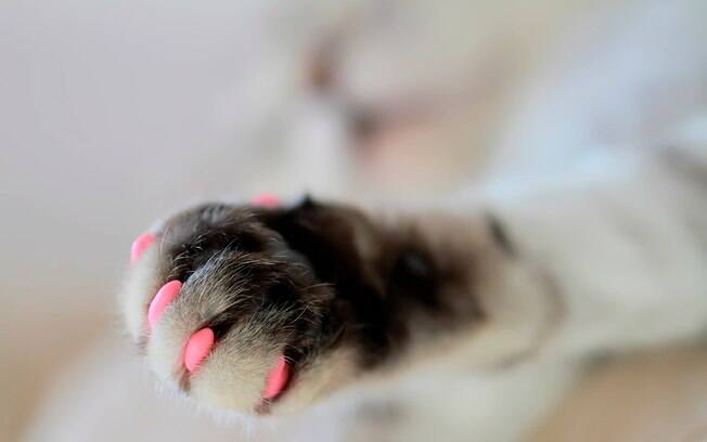As unhas postiças para gatos podem ser encontradas em diferentes cores no varejo.