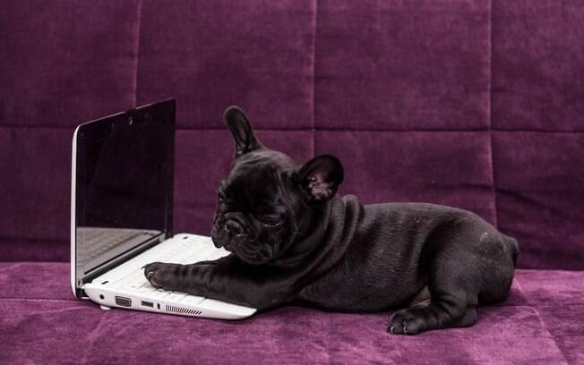 Os animais nas redes sociais não precisa se tornar um problema, basta lidar com consciência. Portanto, lembre-se de dedicar parte do seu dia ao pet e não forçá-lo a fazer algo que não goste