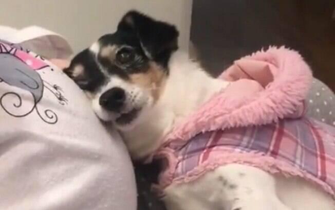 Cadela reconhece gravidez de sua dona e protagoniza vídeo muito fofo