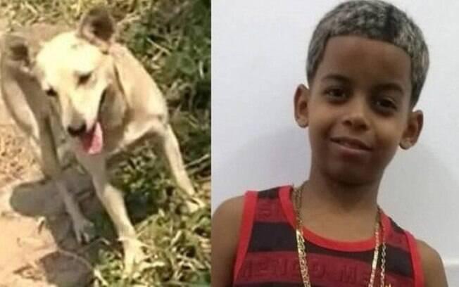 A cadela Amarelinha ajudou nas buscas por Guilherme, que morreu após se afogar no Rio Guandu