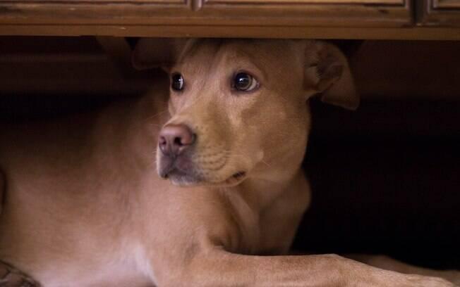 Os fogos soltados durante a Copa do Mundo podem causar medo, estresse e ansiedade nos cachorros.