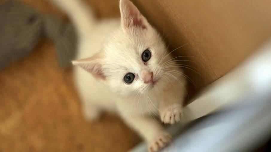 Os gatos são companheiros carinhosos e fiéis para todos os momentos