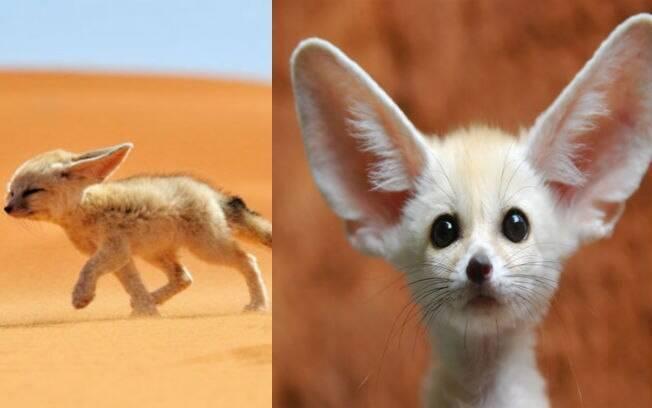 Conhecido Esses filhotes de animais raros são a coisa mais fofa do mundo  AA62