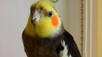 Saiba quais são os alimentos que podem fazer mal para a ave