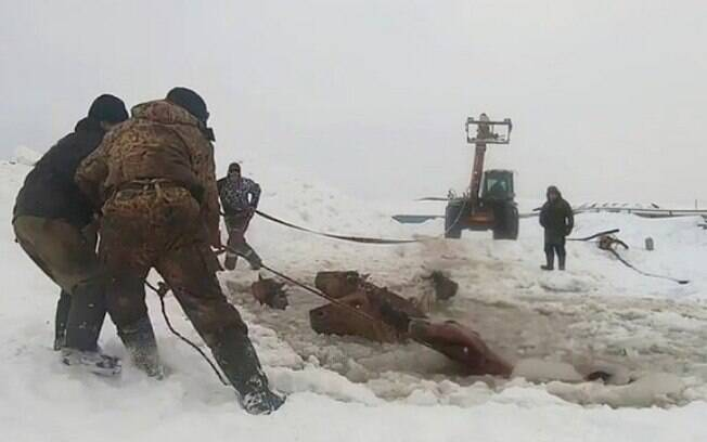Cavalos foram resgatados após caírem em lago congelado