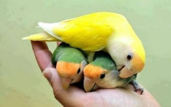 Leve a criação da sua ave a sério