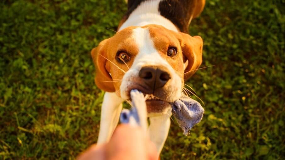 Para educar um cachorro não basta ter os equipamentos certos, o tutor também precisa ser treinado