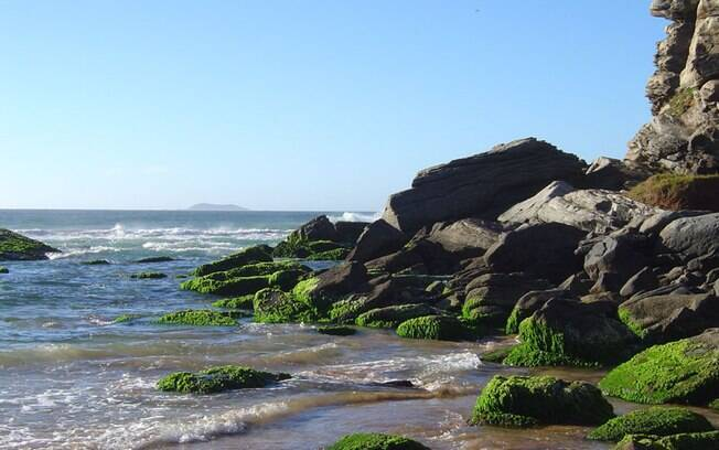 Praia de Geribá é disputada por surfistas e banhistas