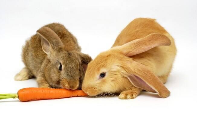 É recomendado pelos especialistas que se opte por um coelho de idade semelhante ao do coelho e do sexo oposto, pois conviverão melhor juntos e as chances de brigarem entre si são mínimas