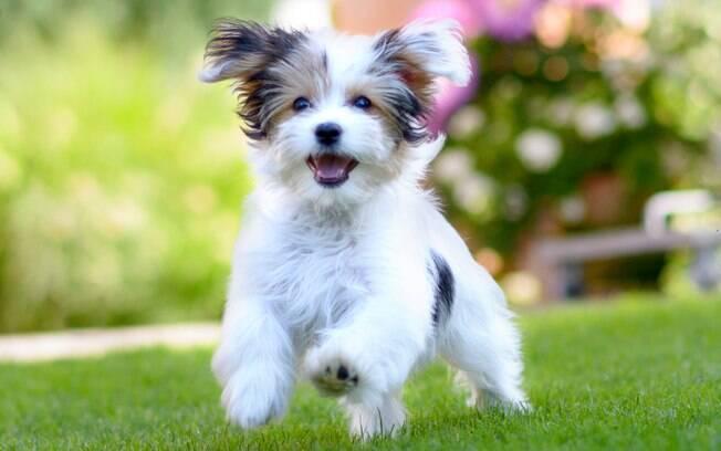 Os cachorros passam pela fase da adolescência entre os 6 e 18 meses de vida