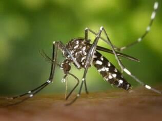 De acordo a agência EFE, na pior das hipóteses, cem dos 600 mil turistas que vão vir ao Brasil devem ser infectados com o vírus da dengue