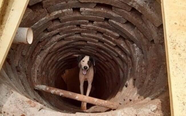 Cachorro caiu em uma fossa de três metros