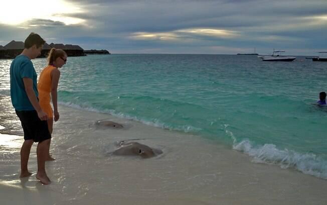 Fernando e Gisella alimentam arraias nas Maldivas
