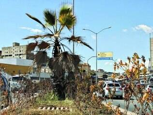 Plantas estão secas e com aparência ruim, segundo pedestres