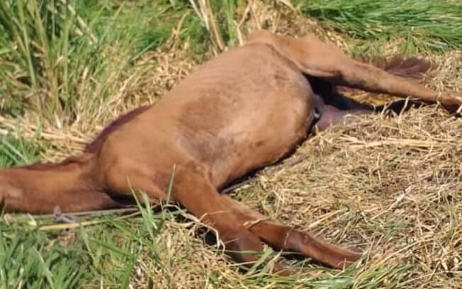 Cavalo abandonado é resgatado no Satélite Íris, em Campinas
