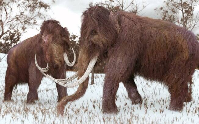 Universidade de Harvard está modificando células de elefantes com DNA de lanoso; espera-se reviver os mamutes