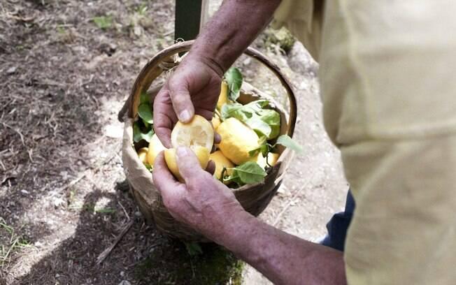 3558db83f4 O limão é exemplo do conflito entre tradição e ganhos de produtividade da  economia moderna.