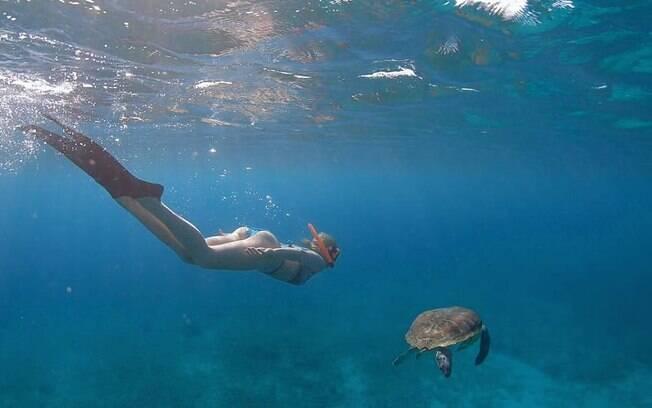 Ana Hickmann mergulha ao lado de tartarugas