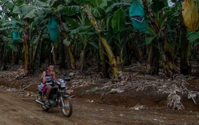 Plantação de banana nas Filipinas, que fica em um território alvo de disputas entre a população indígena local (ambientalistas) e empresas