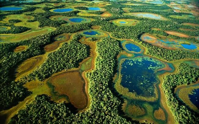 Pantanal abriga milhares de espécies de animais, muitas ainda desconhecidas