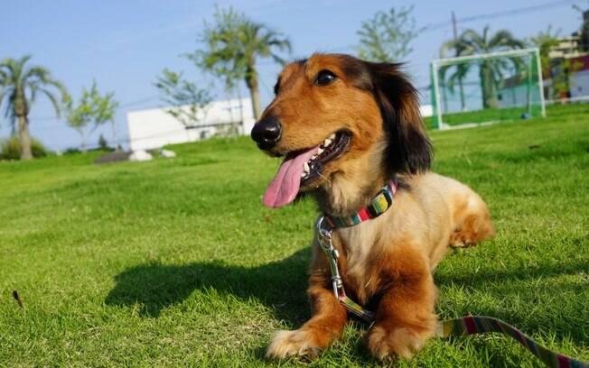 Saiba como identificar a gastrite em cães e maneiras de evitá-la