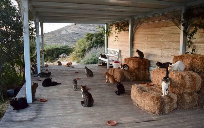 Abrigo para gatos em ilha grega oferece emprego para amante de felinos