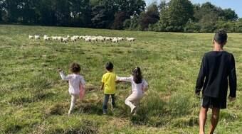 CR7 tem de se mudar por causa de ovelhas e falta de segurança
