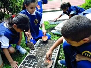Lição.  Estudantes e funcionários da Fundação Salvador Arena já plantaram 5.000 mudas no projeto
