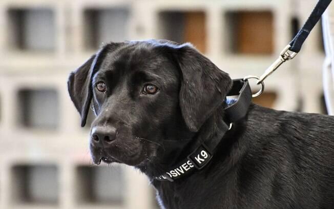A cadela Lulu falhou em seu treino na CIA, mas ganhou a internet