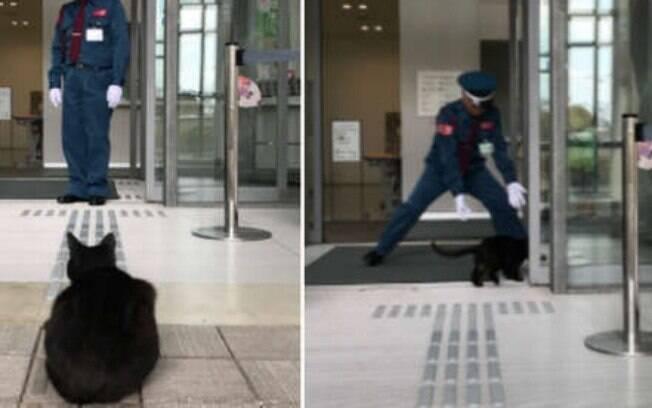 Gatos tentam invadir Museu de Arte no Japaõ há muito tempo e não têm sucesso