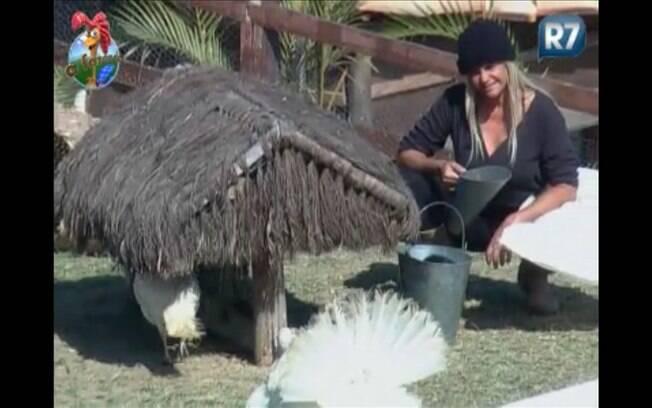 Titia reclama com os perus em conversa sobre os filhotes