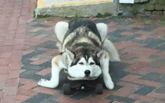 Um skatista em forma de cachorro