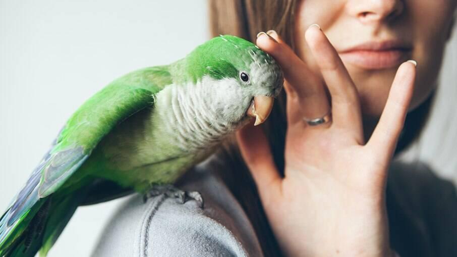 Os papagaios são muito inteligentes e cheios de energia para brincar