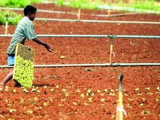 Burocracia.  Produtores rurais, mesmo cadastrados, irrigam plantação sem ter o controle do Estado sobre a quantidade de água usada
