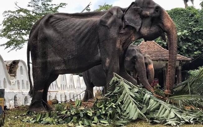 Imagens divulgadas pela ONG mostram estado lastimável em que o animal se encontra