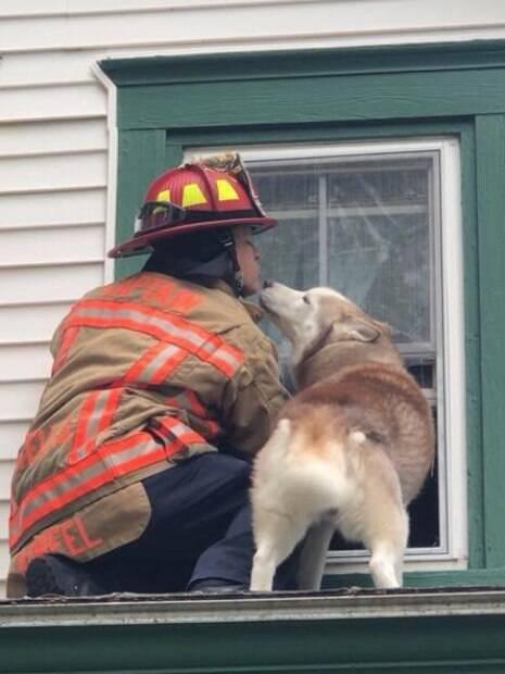 Em agradecimento, cão dá um
