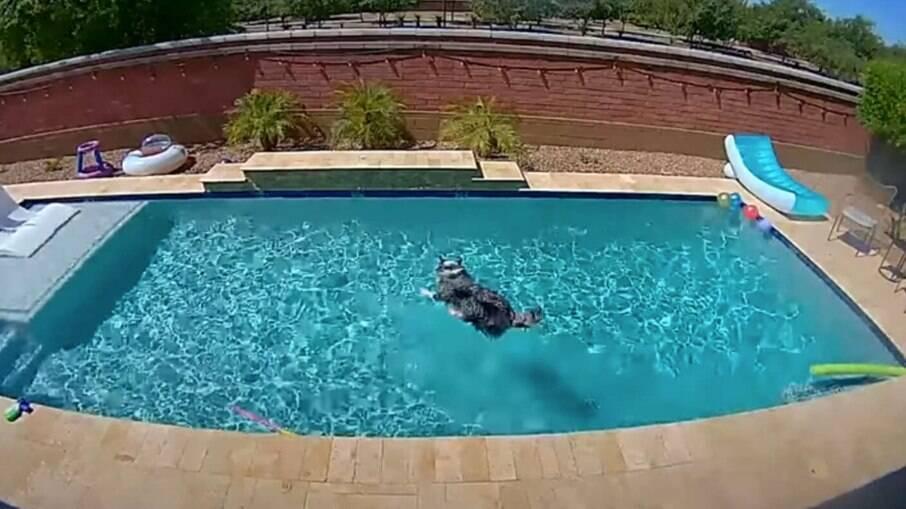 A família do Hamilton instalou câmeras para descobrir o que o pet fazia quando tinha a piscina toda só para ele