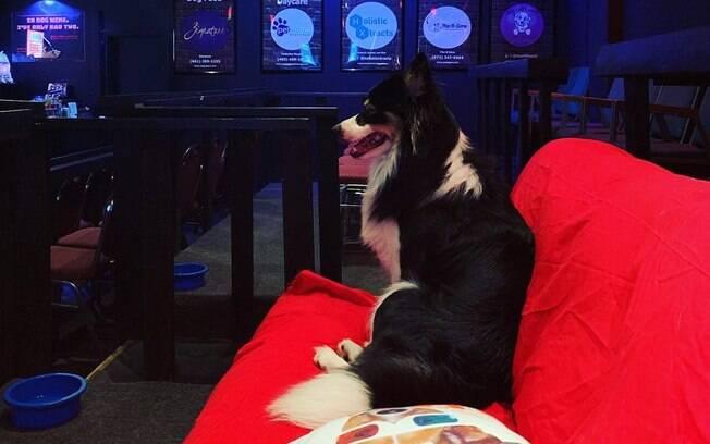 Sala de cinema no Texas aceita cães