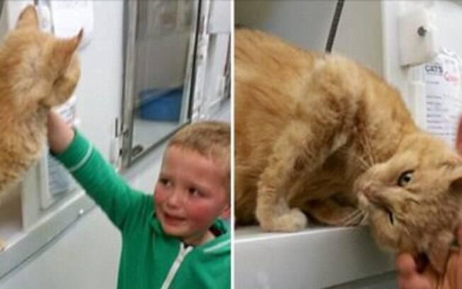 Menino reecontra gato desaparecido há 18 meses.