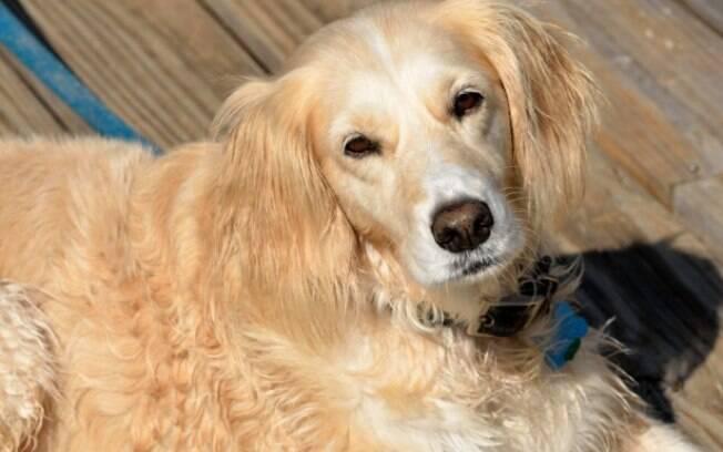 A adoção de cachorros é um gesto nobre