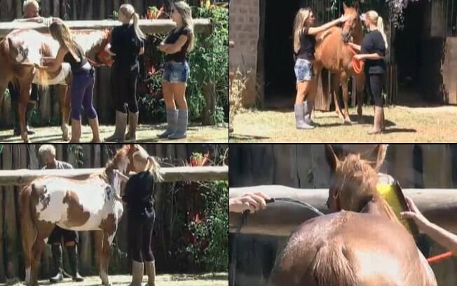 Joana, Raquel e Monique cuidam dos cavalos